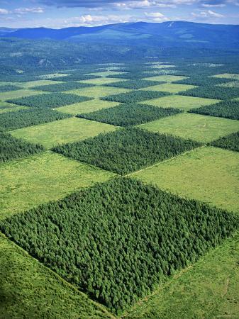 reforestation-coolin-idaho