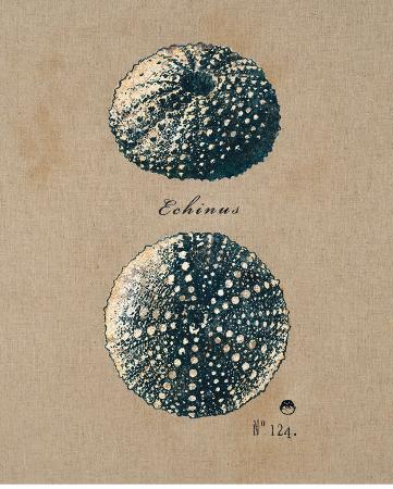 regina-andrew-design-vintage-linen-sea-urchin