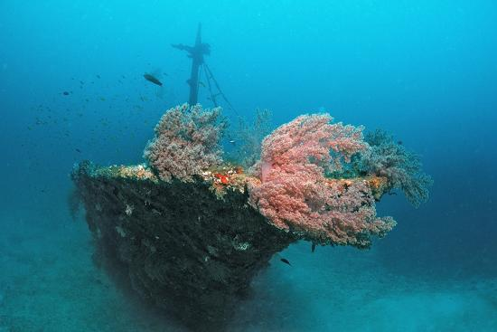 reinhard-dirscherl-halaveli-wreck-and-a-scuba-diver-maldives