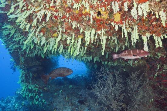 reinhard-dirscherl-soft-corals-in-overhang-maldives