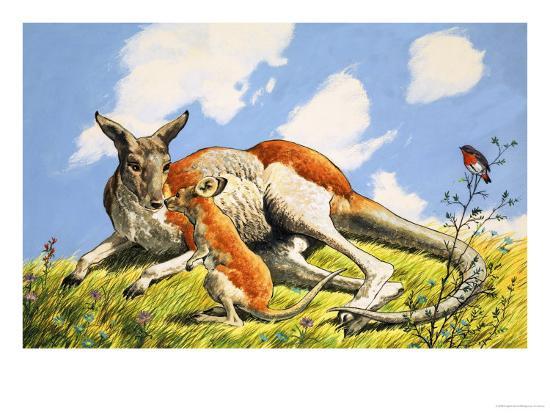 relaxing-kangaroo-with-baby