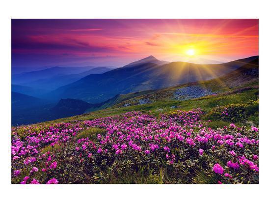 rhododendron-summer-mountain