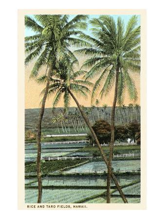 rice-and-taro-fields-hawaii