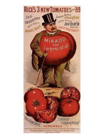rice-s-tomato-seeds-mikado-c-1889