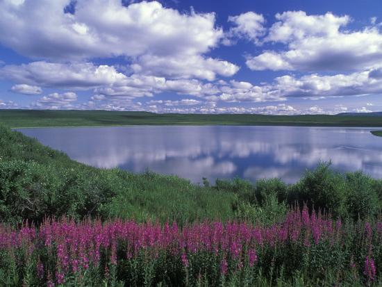 rich-reid-fireweed-lake-and-clouds-reflecting-in-a-lake-alaska