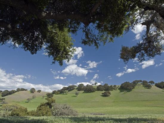 rich-reid-oak-woodlands-and-spring-clouds-california
