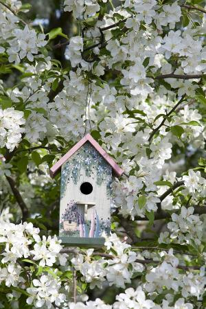 richard-ans-susan-day-nest-box-in-blooming-sugartyme-crabapple-tree-marion-illinois-usa
