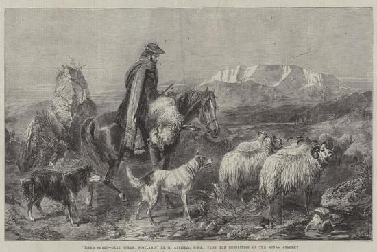 richard-ansdell-tired-sheep-glen-spean-scotland-from-the-exhibition-of-the-royal-academy