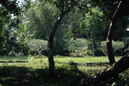 richard-bryant-trees-in-garden-at-lunuganga-garden-dedduwa-lake-bentota-sri-lanka