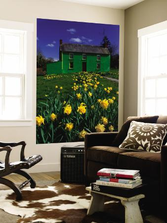 richard-cummins-brightly-painted-farmhouse-with-yellow-daffodils-growing-in-the-garden-crookstown-county-cor