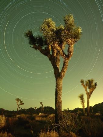 richard-cummins-star-trails-and-joshua-trees