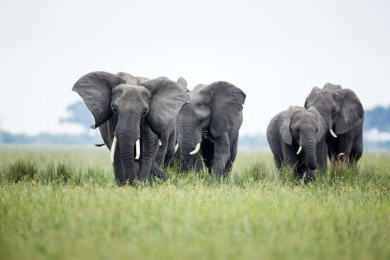 richard-du-toit-an-elephant-herd-in-grassland