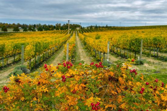 richard-duval-autumn-in-leonetti-vineyard-walla-walla-washington-usa