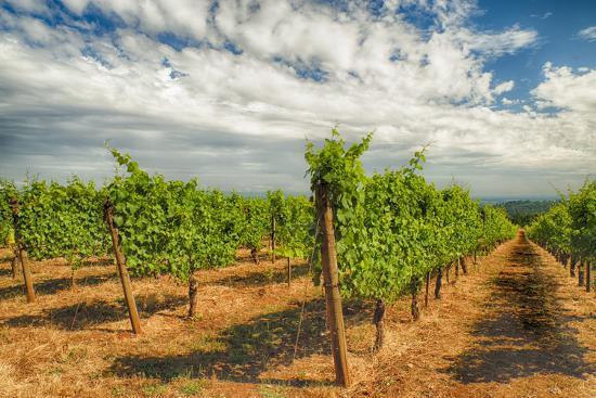 richard-duval-oregon-dundee-vineyard-in-dundee-hills