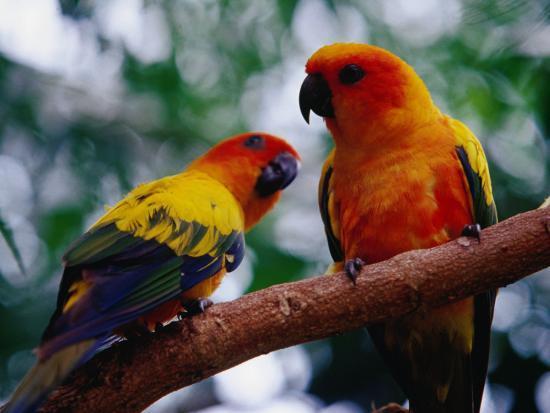 richard-l-anson-parrots-at-graham-hall-nature-sanctuary