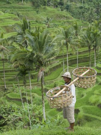richard-maschmeyer-rice-terraces-near-tegallalang-village-bali-indonesia-southeast-asia-asia