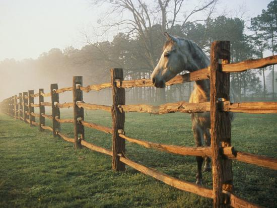 richard-nowitz-a-horse-watches-the-mist-roll-in-over-the-fields