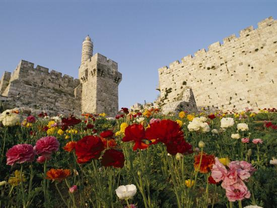 richard-nowitz-a-view-of-flowers-growing-outside-a-castle