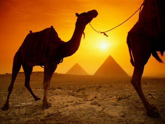 richard-nowitz-dromedary-camels-with-the-pyramids-of-giza-in-the-background