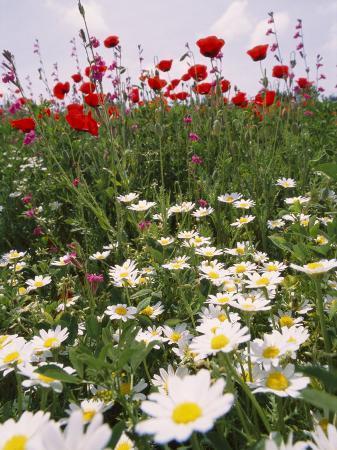 richard-nowitz-wildflower-farming-on-a-kibbutz-in-springtime