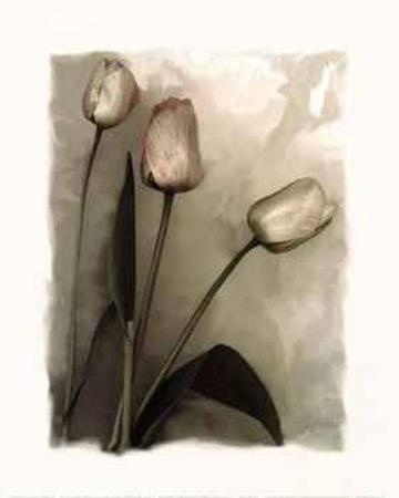 richard-sutton-tulips-i