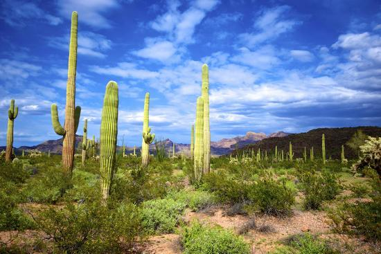 richard-wright-organ-pipe-cactus-national-monument-ajo-mountain-drive-in-the-desert