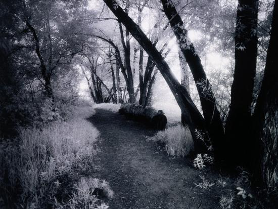rick-kooker-path-through-the-woods-infrared-photograph