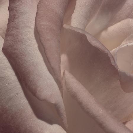 rita-crane-heart-of-a-rose-vii