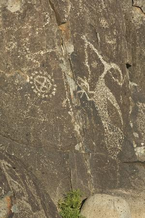 roadrunner-with-a-snake-and-other-jornada-mogollon-petroglyphs-at-three-rivers-site-new-mexico