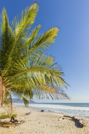 rob-francis-palm-trees-on-this-beautiful-surf-beach-near-mal-pais-santa-teresa-costa-rica