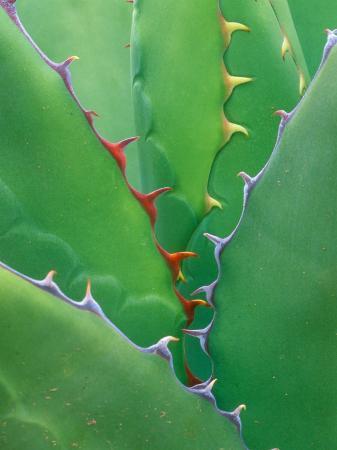 rob-tilley-agave-sonora-desert-museum-tucson-arizona-usa