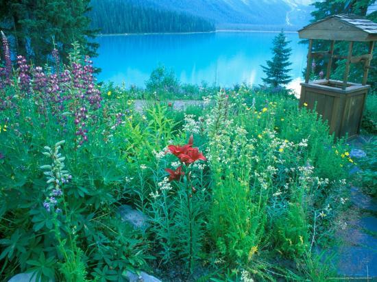 rob-tilley-emerald-lake-yoho-national-park-british-columbia