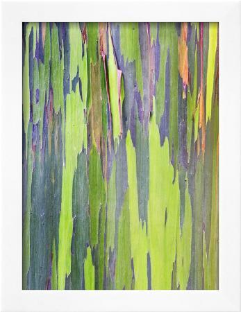 rob-tilley-rainbow-eucalyptus-trunk-near-hana-maui-hawaii-usa