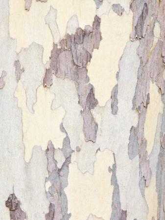 rob-tilley-sycamore-trunk-detail-sedona-arizona-usa