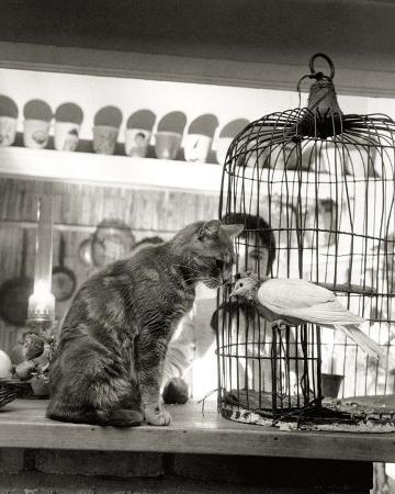 robert-doisneau-child-cat-and-dove