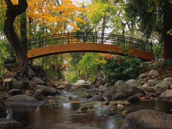 robert-glusic-footbridge-over-stream