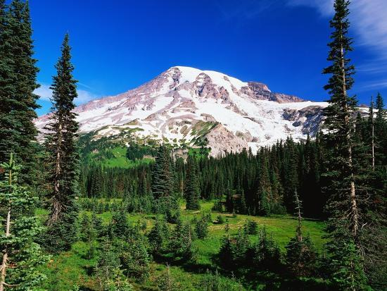 robert-glusic-mount-rainier-beyond-forest