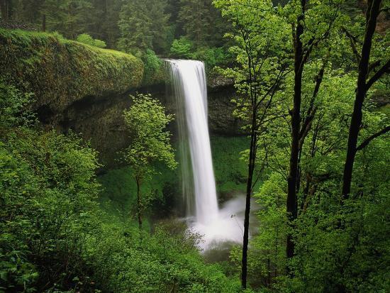 robert-glusic-waterfall-surrounded-by-vegetation