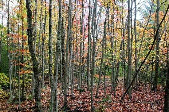 robert-goldwitz-grey-tree-stand-autumn