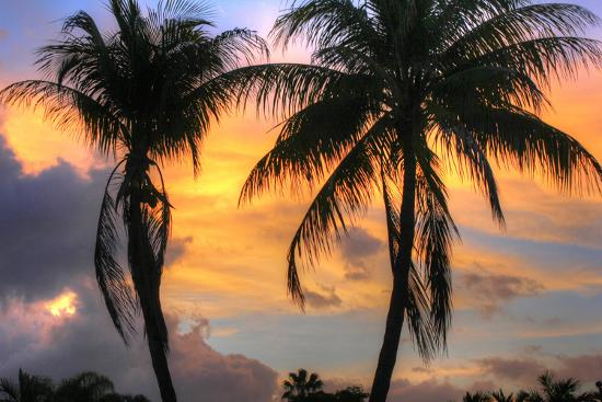 robert-goldwitz-key-west-two-palm-sunrise