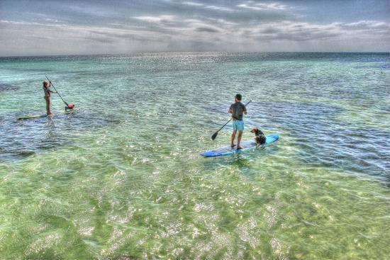 robert-goldwitz-paddle-board-pups