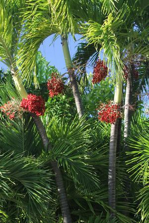 robert-goldwitz-palm-fruit-vertical