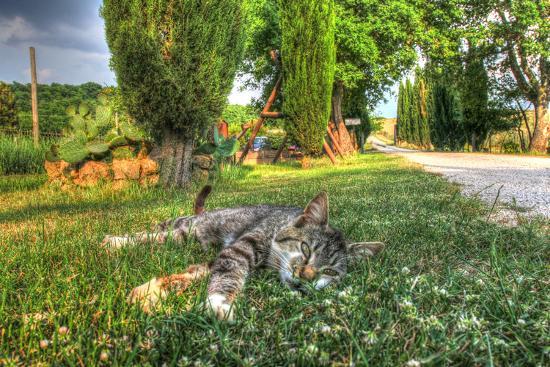 robert-goldwitz-tuscan-sleepy-cat