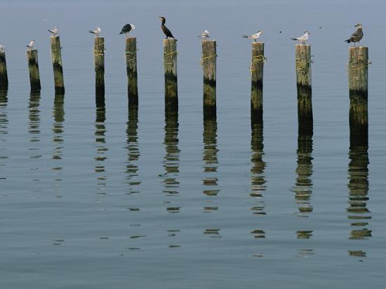 robert-madden-gulls-perched-on-pilings