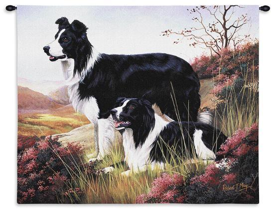 robert-may-border-collie