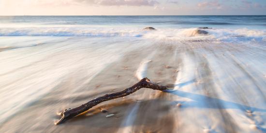 robert-maynard-branch-on-the-sea