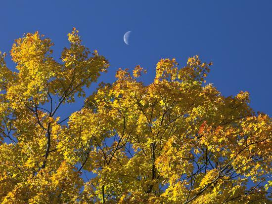 robert-servranckx-crescent-moon-in-the-daytime-sky-over-fall-maple-trees