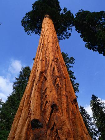 roberto-gerometta-giant-tree-sequoia-national-park-california-usa
