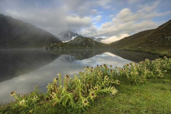 roberto-moiola-mist-and-flowers-frames-the-fenetre-lakes-ferret-valley-italy