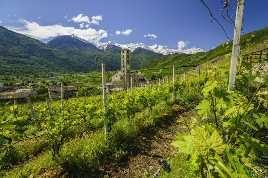 roberto-moiola-the-church-of-bianzone-seen-from-the-green-vineyards-of-valtellina-lombardy-italy-europe